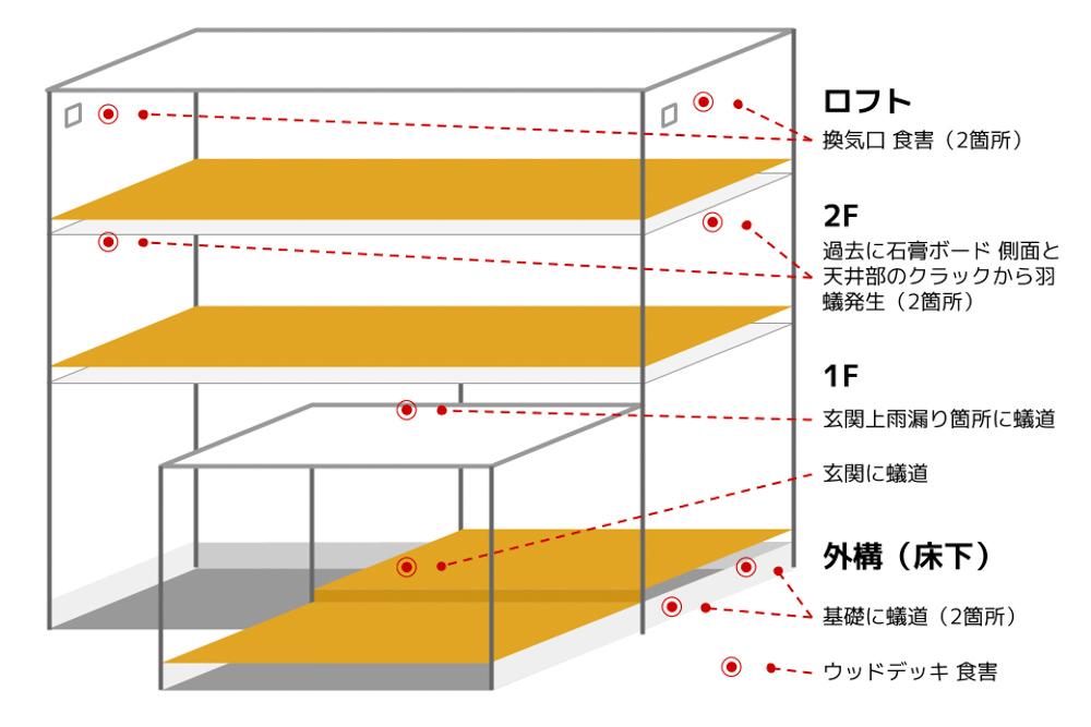 東京自宅 シロアリ被害状況と対策を考える