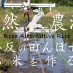 自然農法 半反の田んぼでお米を作る 房総オルタナティブ米ができるまで 半年間の軌跡 動画編+記事まとめ
