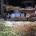 小麦の脱穀の様子 動画編