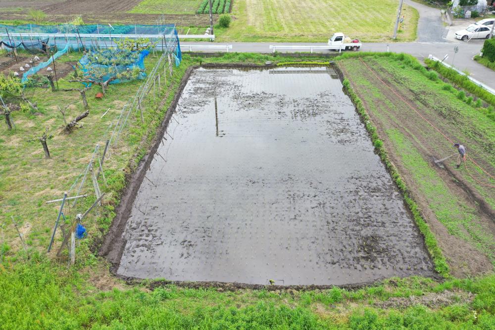房総オルタナティブライスフィールド 2021年田植え DAY7 田植え完了! 大人の泥遊び