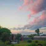 日がな一日野良仕事 ニンニク畑の雑草刈りとインゲン豆の支柱を直し定植