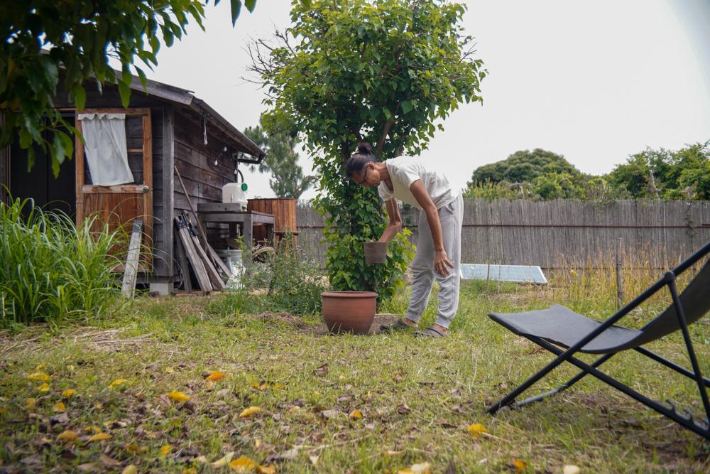蓮をタネから育てる Phase2 東京自宅で育ててきたハスを房総フィールドに移送し睡蓮鉢に移す+小麦の収穫2日目