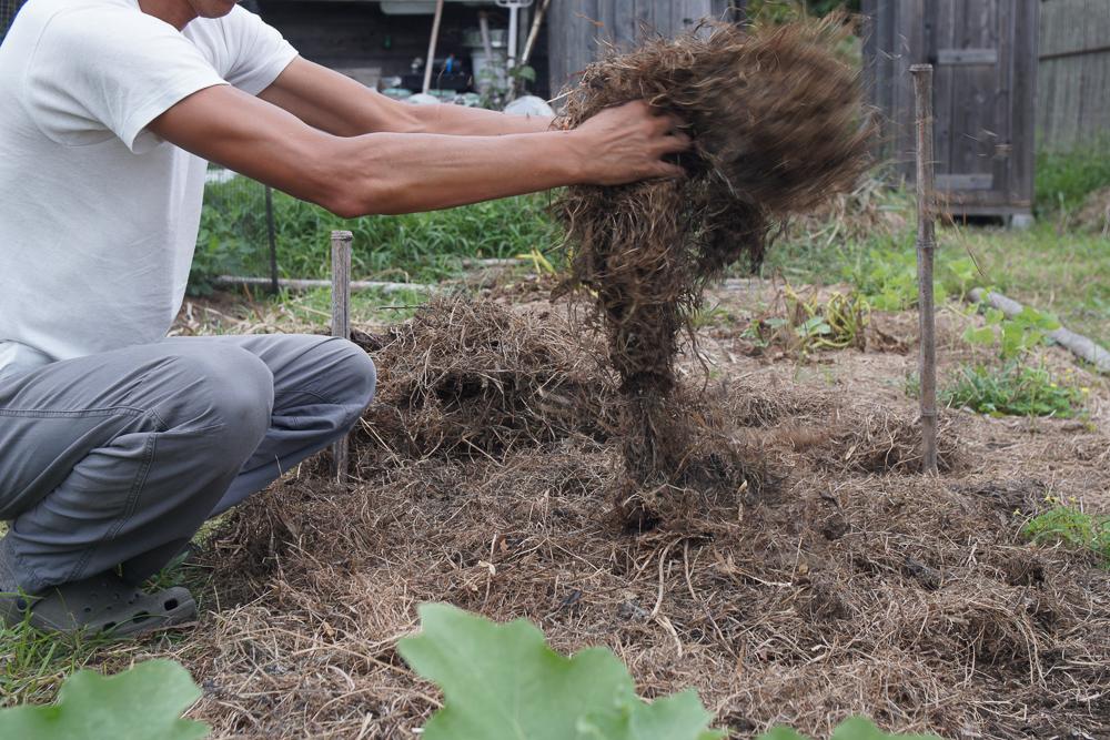 房総フィールドガーデン 秋の種下ろし 玉ねぎ 刈り取った雑草を被せる