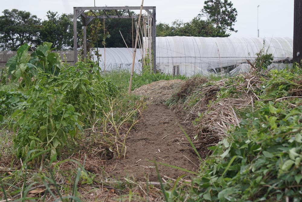房総フィールドガーデン 秋の種下ろし 黒丸大根畑を耕起