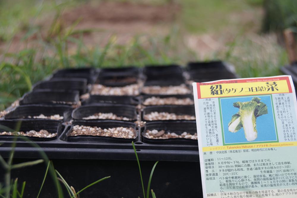 房総フィールドガーデン 秋の種下ろし タケノコ白菜