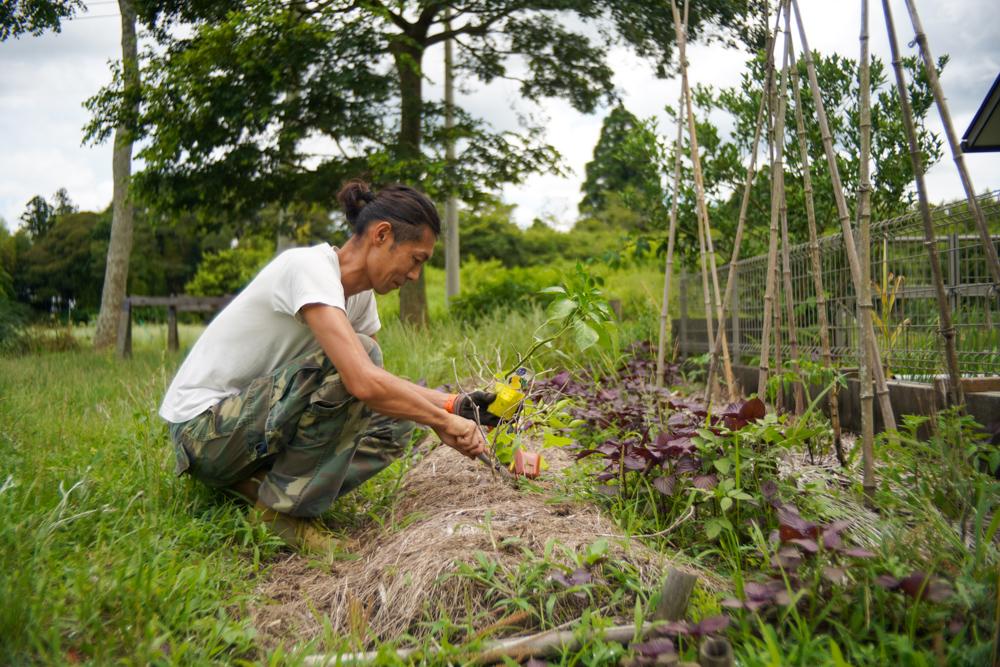 ミニミニ玉ねぎ・ミニミニじゃがいもの収穫と買ってきた苗の植え付け(ズッキーニ・ピーマン・枝豆 湯上がり美人)