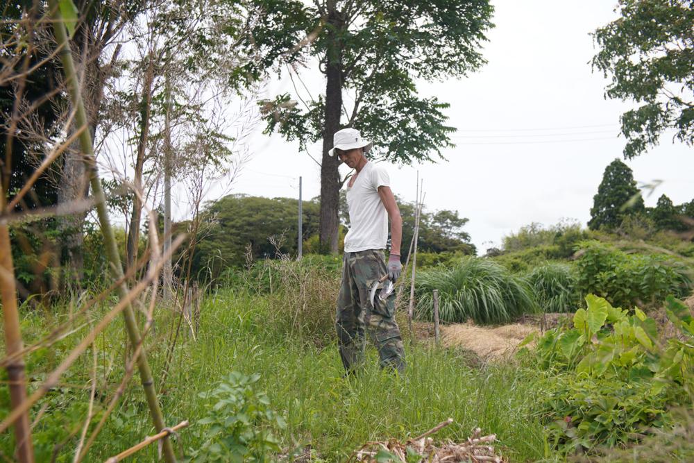 ニンニク区画の雑草抜きと黒豆・枝豆の種おろし