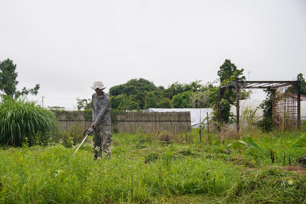 陰の力に包まれる房総フィールド 夏前の草刈り