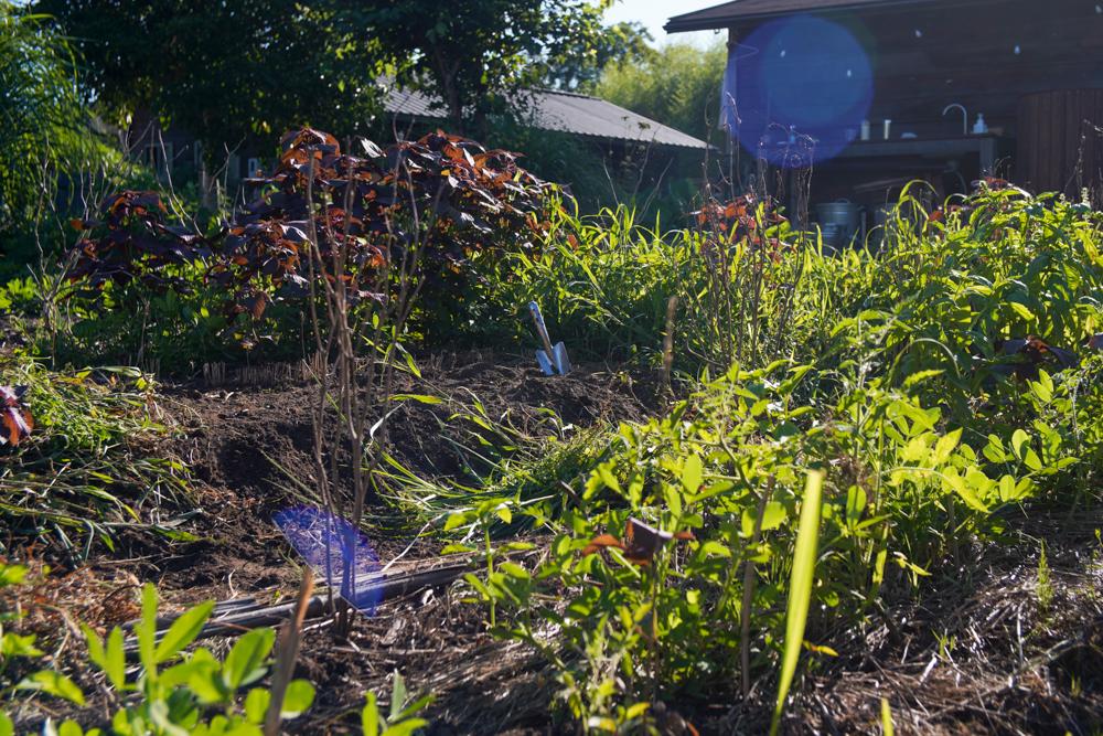 2021年夏はじめ 雑草を抜きながら夏の野良仕事に向けウォームアップ!
