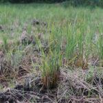 七十二候 水始涸 みずはじめてかる 房総フィールド今年最後の草刈り