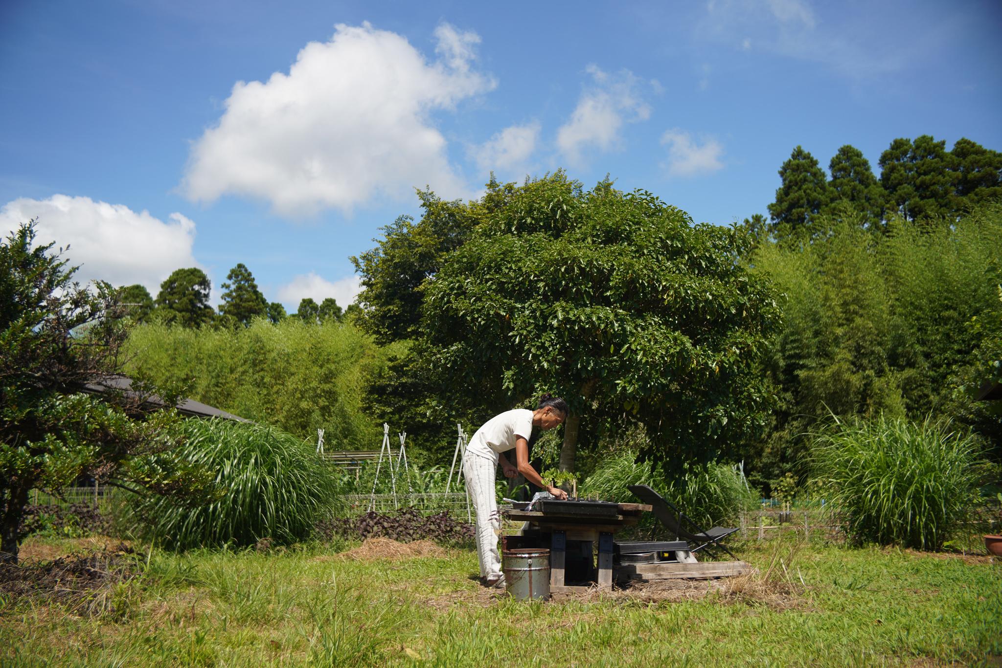 真夏の朝の夢、真夏の夜の夢 畑の雑草抜きと大根のタネと小豆のタネと