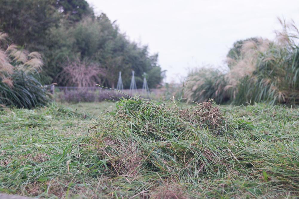 房総フィールド今年最後の草刈り