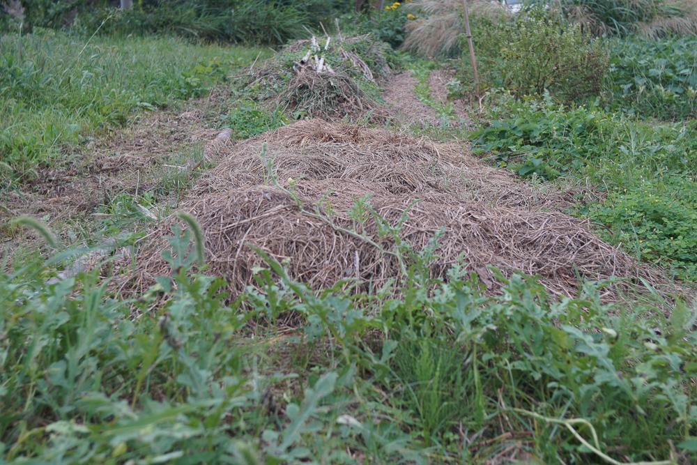 房総オーガニックガーデン 2019年にんにくの植え付け 植え付け前 雑草を敷き詰めていたの区画