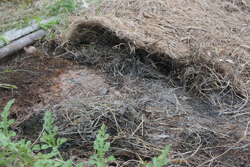 房総オーガニックガーデン 2019年にんにくの植え付け 雑草堆肥