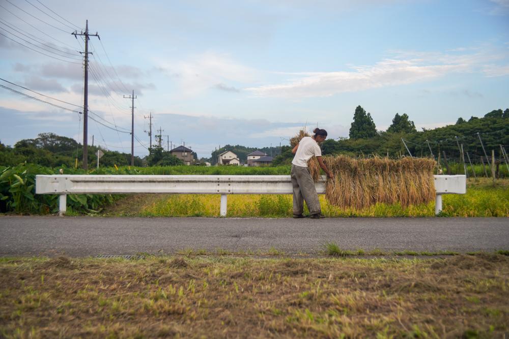 房総オルタナティブライスフィールド 2021年稲刈りDAY2 田んぼの水抜き