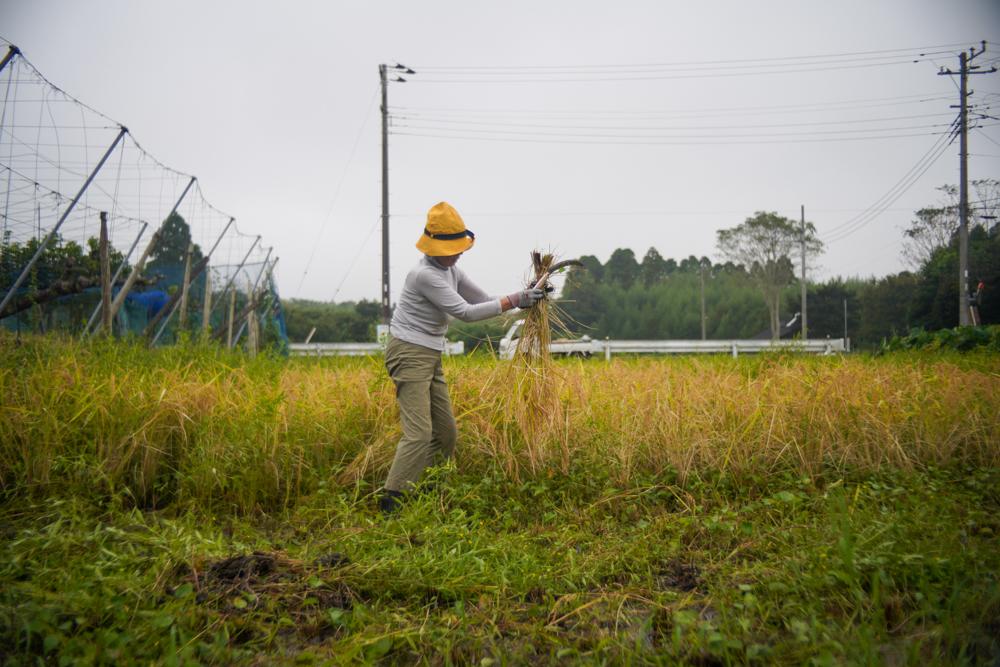 房総オルタナティブライスフィールド 2021年稲刈りDAY3 曇りのち雨
