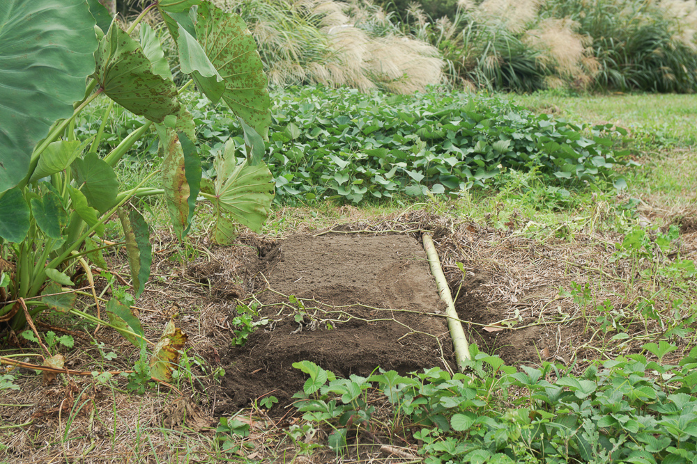 そら豆植え付け区画準備