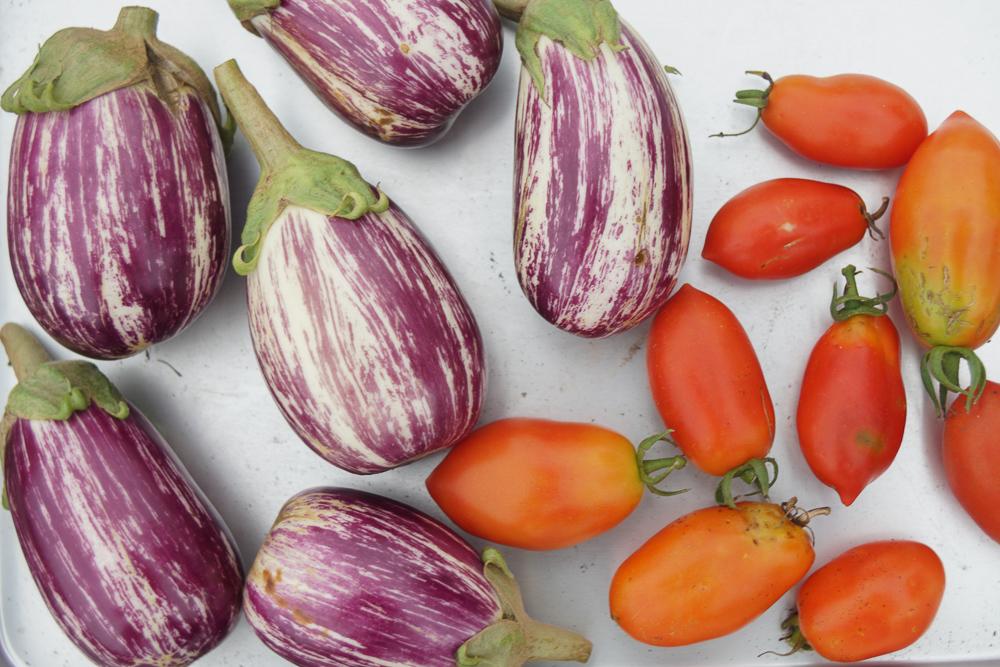 房総フィールド産 イタリアントマトとリスターダデガンジア ナス