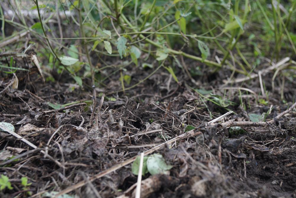 落花生収穫ごの土の香り
