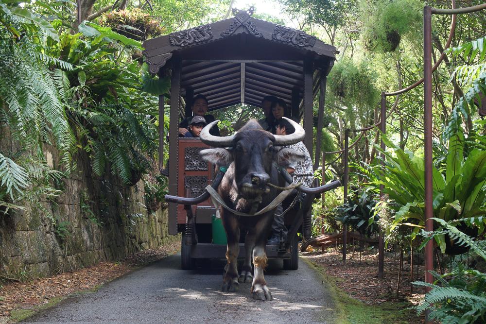 ビオスの丘 牛車