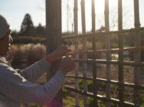 パーゴラの竹垣修復 2020