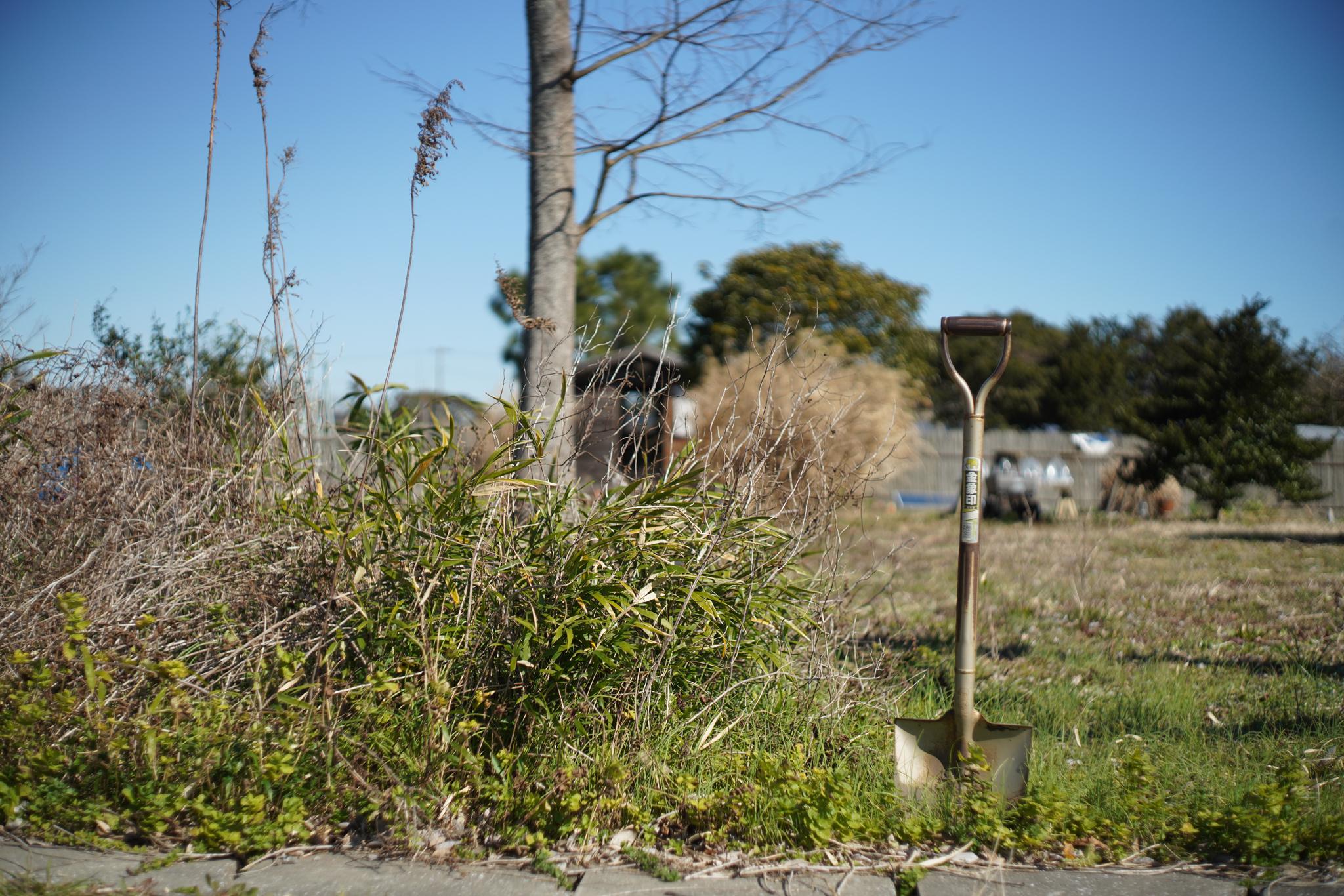ミント畑の竹の根 抜根