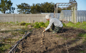 新月の日にじゃがいもの植え付けとナスの種下ろし