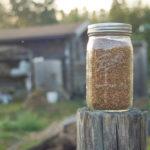 小麦の種下ろし 2019