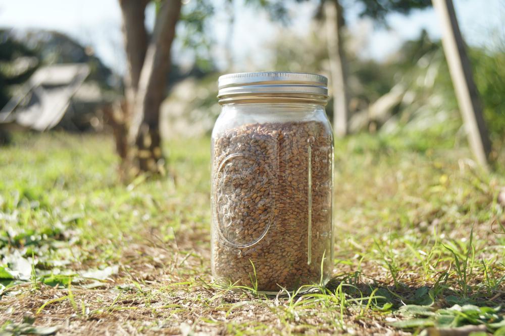 小麦の保存にはメイソンジャーがおすすめ?