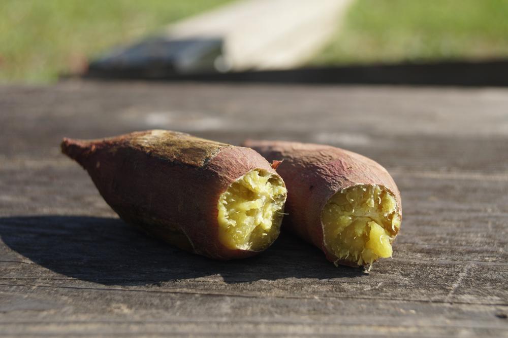 ソーラー焼き芋! 真空管ソーラークッカーエコ作で焼き芋を作る