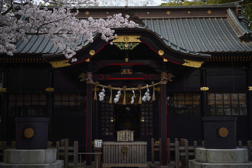 究極の50mmレンズ Leica APO SUMMICRON 50mm f2.0 ASPH. 玉前神社の桜