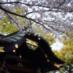 究極の50mmレンズ Leica APO SUMMICRON 50mm f2.0 ASPH. 上総一ノ宮 玉前神社と桜