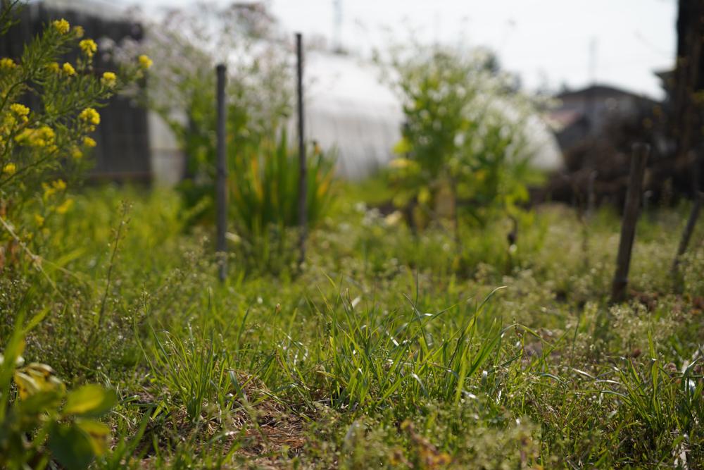 スーパームーンと草刈りと夕陽