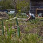 スーパームーンと草刈りと夕陽と筍ご飯