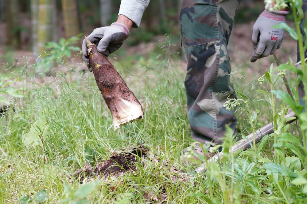 たけのこ掘りを初体験!+2020年 里芋の植え付け