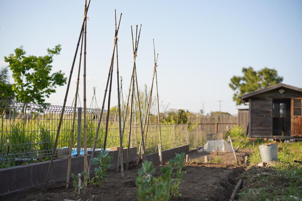 トマトの畑の準備
