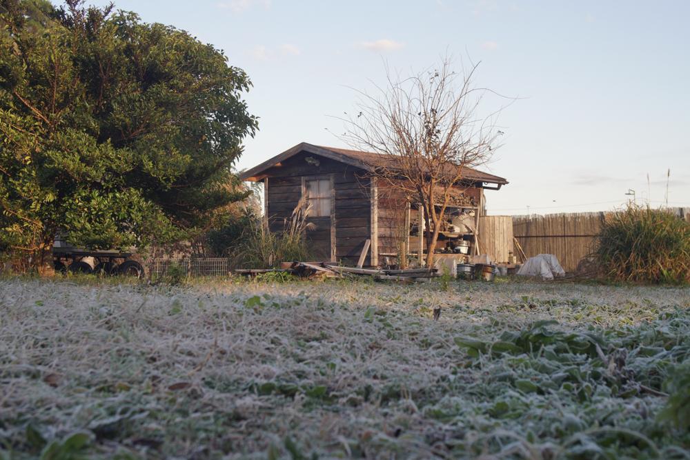 霜が降り始めた房総フィールド