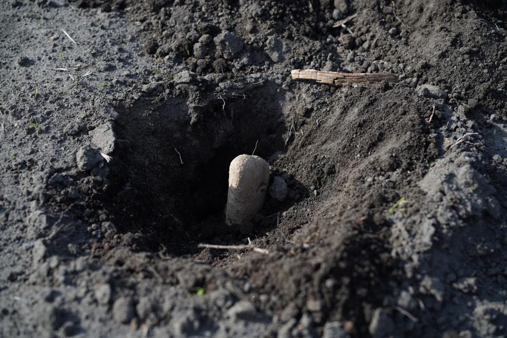 再びたけのこ掘りとトマト・カボチャ定植などなど