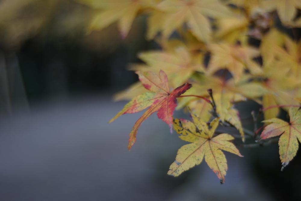 香取神宮の紅葉