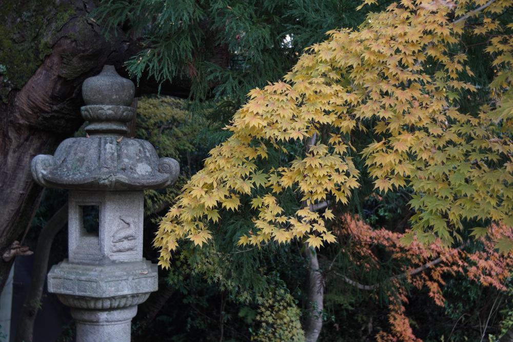 香取神宮 参道の紅葉
