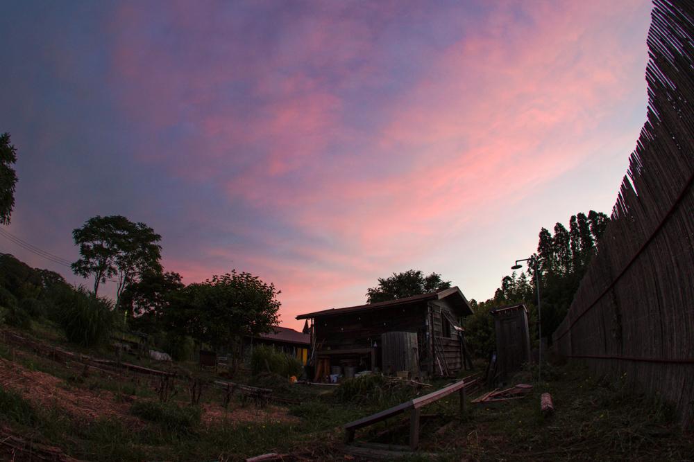 田んぼの草刈りとネジバナと綺麗な夕陽