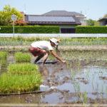 房総オルタナティブライスフィールド 田植えDAY2 初めての田んぼ、初めての手植え