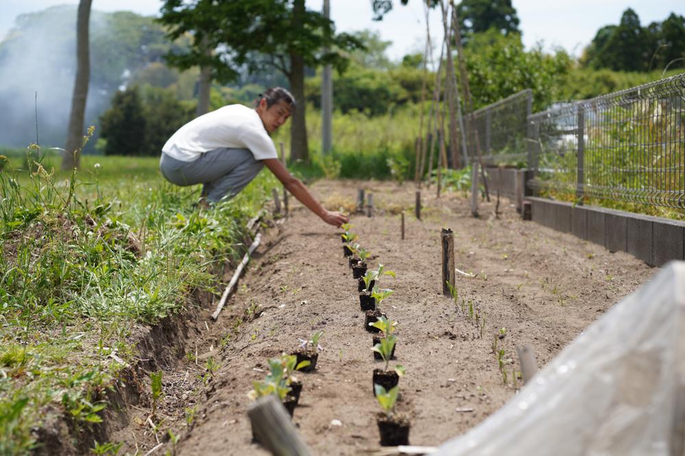 ひょんなことから今日も房総で過ごしてます 生姜・ブランディワイントマト・ホワイトキャベツ・白ナス ルイジアナロングを定植