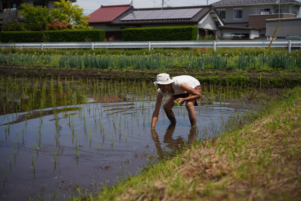房総オルタナティブライスフィールド 田植えDAY3 初めての田んぼ、初めての手植え