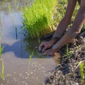 初めての田植えを終え感じたこと いまの農業・いまの社会システムの矛盾、そして、ポストコロナウイルスの時代の仕事