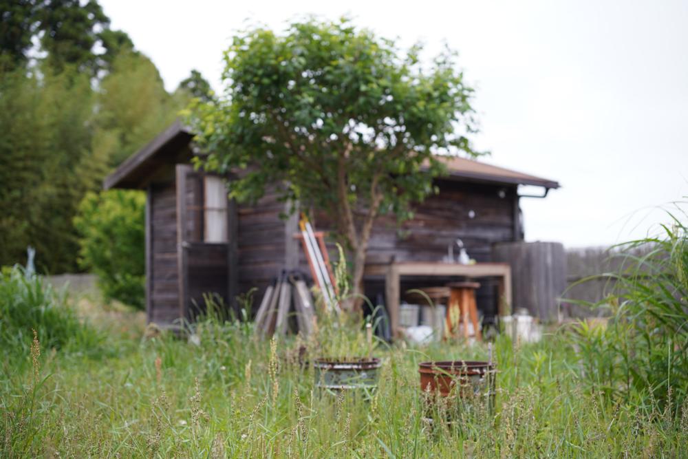 草刈りと草刈機のメンテナンス