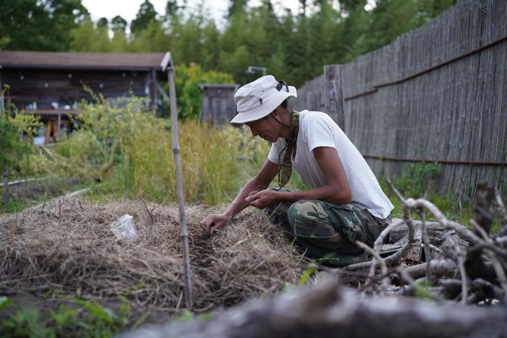 落花生、はと麦の種まき、ピーマン、バジルの定植、そら豆とイチゴの収穫