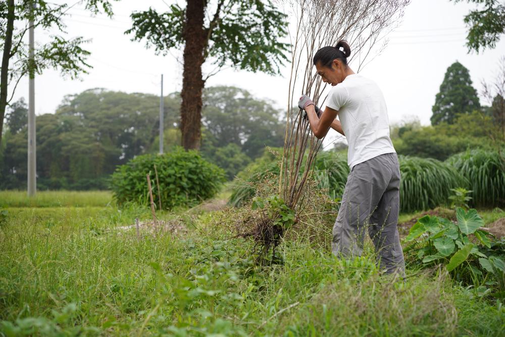 ニンニク畑の草むしり