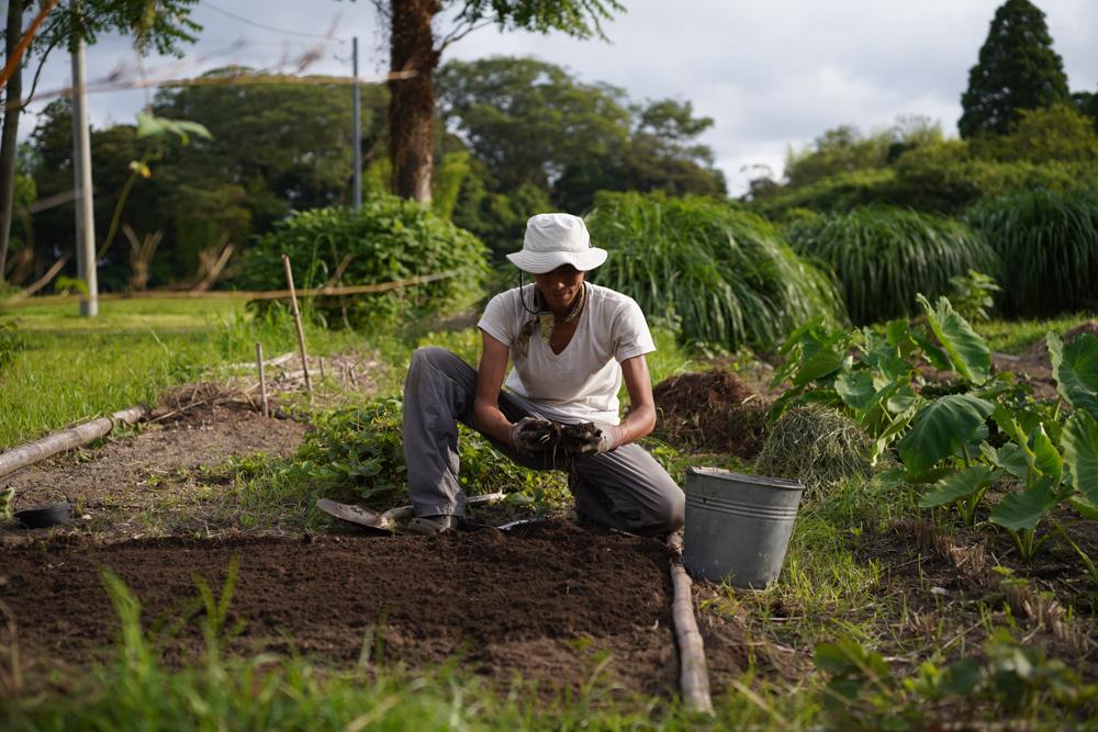 ニンニク畑の開梱とミニミニ田んぼに苗を植えてみる