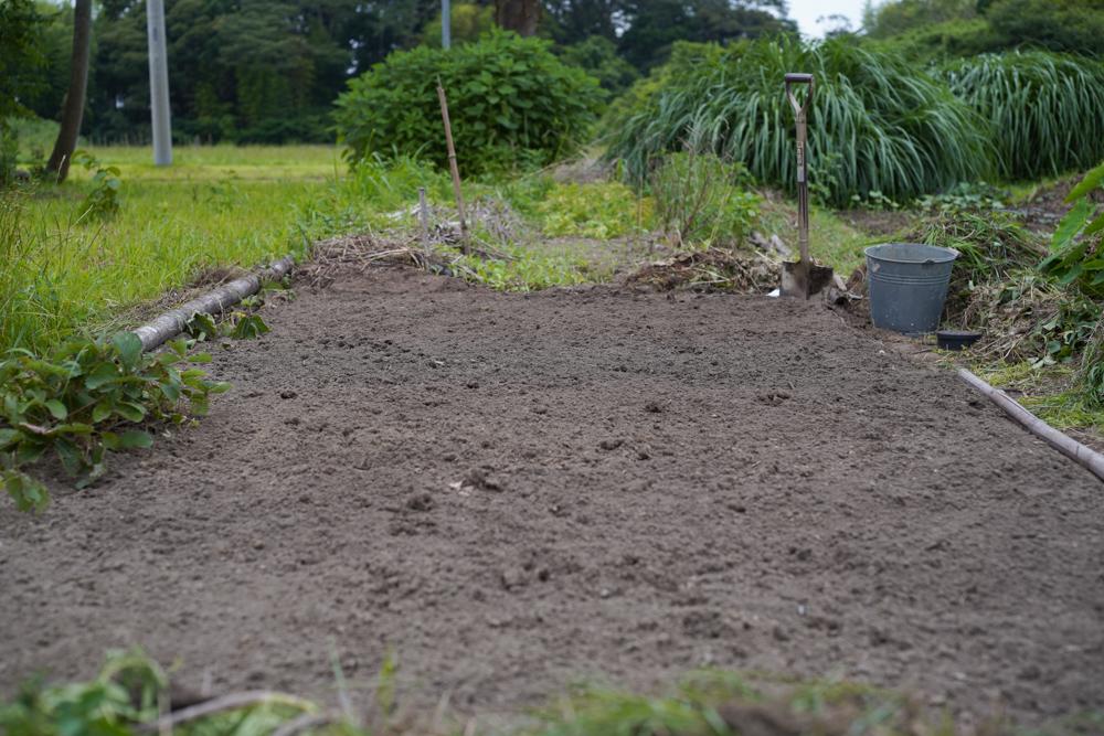 ニンニク畑の開墾完了!草マルチで覆う